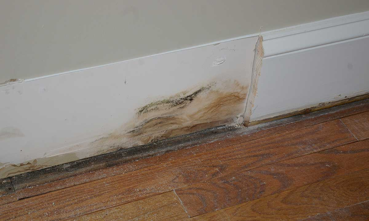 Moisture damage found during an interior remodeling project